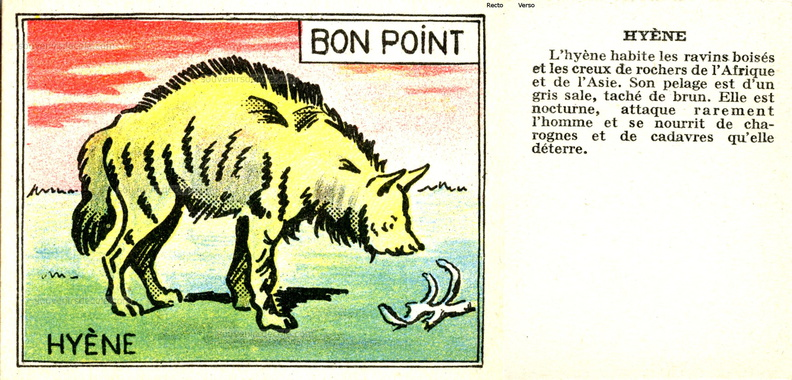 Bon point Faune - cartonné 5 x 6,5 cm - Hyène.jpg