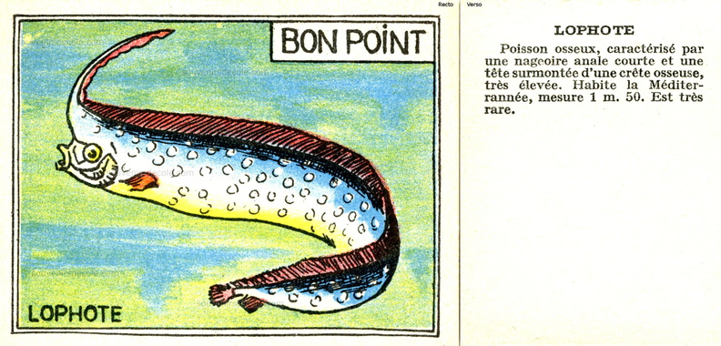 Bon point Faune - cartonné 5 x 6,5 cm - Lophote.jpg