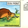 Bon point - Ornythorynque