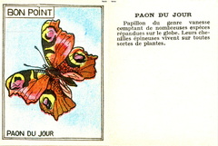 Bon point - Paon du jour