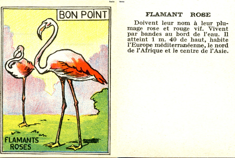 Bon point Faune - cartonné 5 x 6,5 cm - Flamant rose.jpg