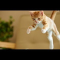 Epic Funny Cats Jump Fail 2014-2013